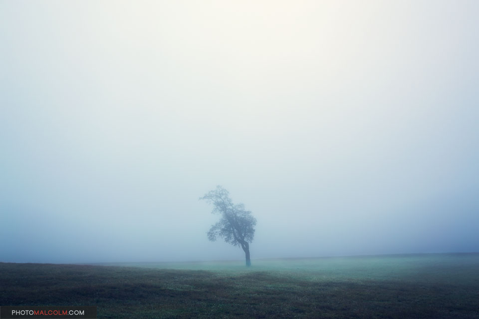 Lone Tree in Fog